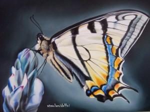 Farfalla - olio su tela (50x70)