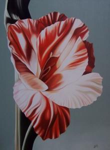 Gladiolo - olio su tela (60x80)