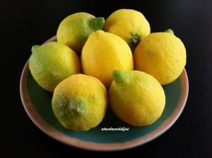 Limoni di Pattano (Sa)