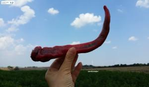 Peperoni corna di capra