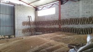Trecce di aglio e grano saragolla