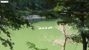 Lago Frontetusio