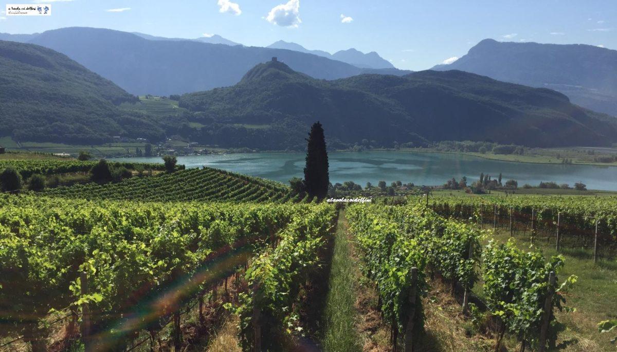 Come il clima influisce sulle abitudini di produzione del vino